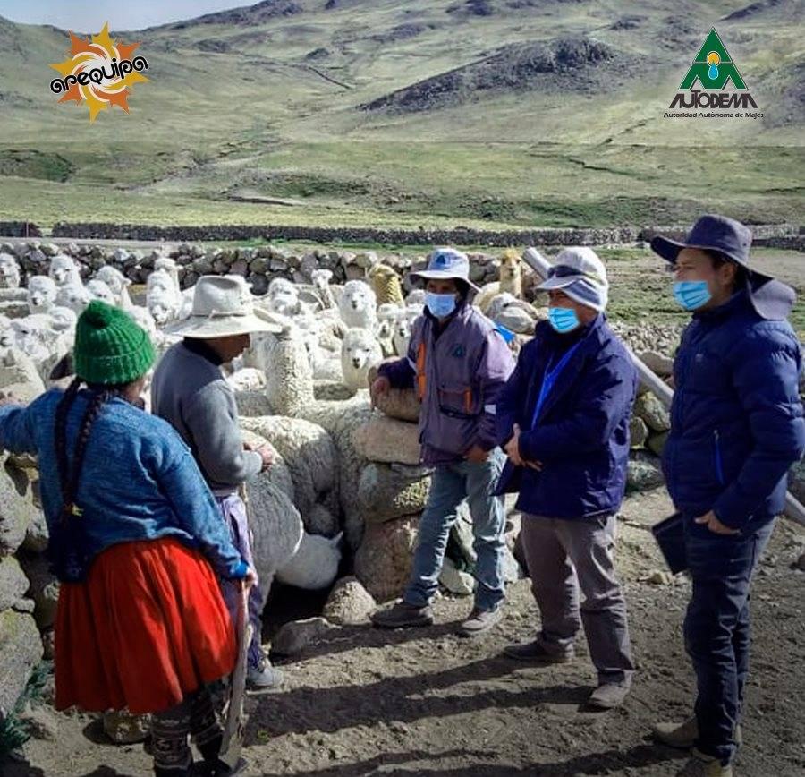 AUTODEMA CUMPLE CON LOS COMPROMISOS AMBIENTALES EN CAYLLOMA DERIVADOS DEL PROYECTO MAJES SIGUAS II ETAPA